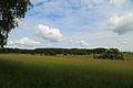 Naturschutzgebiet Byhleguhrer See 02.JPG