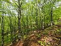 Naturschutzgebiet Nr. 158 Greifenstein (Gebiet an der Burg Greifenstein) 2 Sublocation DE-TH WDPA ID 163316.jpg