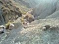 Navidhand new 323 - panoramio.jpg