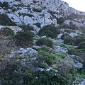 Naxxar entrenchment - natural cut rock and side built wall.jpeg