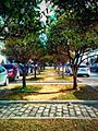 Near the Mosque - Carthage - Tunis.jpg