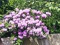 New York Botanical Garden 01.jpg