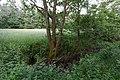 Niederrodener Lache 5.jpg