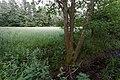 Niederrodener Lache 6.jpg