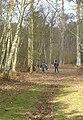 North Park Wood, Parham Estate, Nr Storrington, West Sussex - geograph.org.uk - 24027.jpg