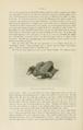 NovitatesZoologicae18 532.png