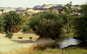 Trans-Saharan trade - The Bilma oasis in northeast Niger, with the Kaouar escarpment in the background