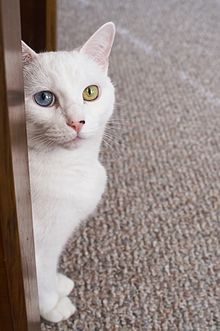 arctic cat dealers minnesota