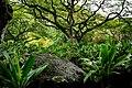 Odd Tree (5217055358).jpg