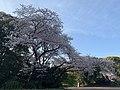 Oita Ken Gokoku Shrine 20200406.jpg