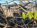 Old school, new leaves - geograph.org.uk - 1235694.jpg