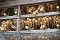 Onions hanging on drying racks in Fukudomi 02.jpg