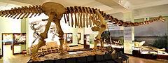 Kompletny szkielet eksponowany w Muzeum Ewolucji Instytutu Paleobiologii PAN