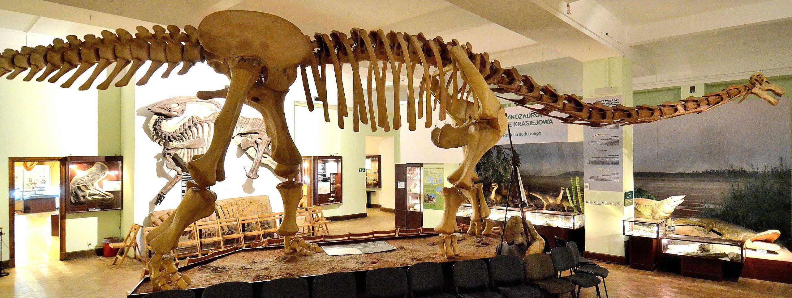 Opisthocoelicaudia Museum of Evolution in Warsaw 02.JPG