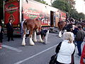 Orange Grove before Rose Parade 2009 (3160633985).jpg