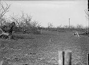 Orchard cut down by Germans Spring 1917 IWM Q 2092