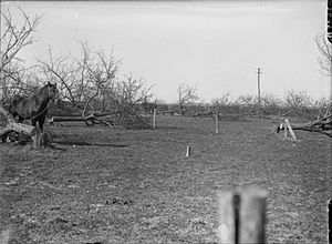 Operation Alberich - Image: Orchard cut down by Germans Spring 1917 IWM Q 2092