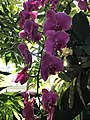 Orchid Show.jpg