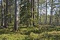 Ore 77-1, Halgonberget - KMB - 16001000260628.jpg