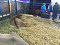 Oregon State Fair 2016 15.jpg
