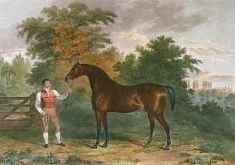 Orville (horse) - Image: Orville (horse)