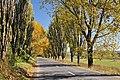 Ostrov, Romania - panoramio (1).jpg