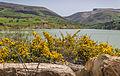 Oued Zitoun111.jpg