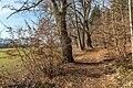 Pörtschach Winklern Quellweg Wanderweg Eichen am Waldrand 09012020 7992.jpg