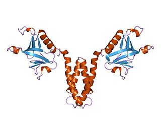 Signal transducing adaptor protein