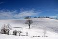 Paesaggio invernale (5606752976).jpg