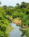 Paisaje campestre Tropical2.jpg