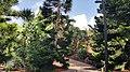 Palmetum3.jpg