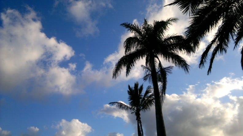 Palmtreesil