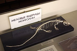 Varanoidea - Fossil of a parasaniwid