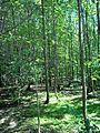 Parc-nature du Bois-de-l-ile-Bizard 02.jpg