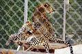 Parc animalier, Friguia, Tunisie, 25 décembre 2015 DSC 1879.jpg