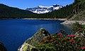 Parco naturale Alpe Devero - Lago Devero e flora.jpg