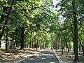 Park Bukovičke Banje - panoramio.jpg