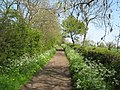 Patches Lane in Springtime - geograph.org.uk - 1360510.jpg