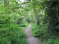 Path from Holt Copse - geograph.org.uk - 1288694.jpg