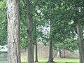 Peck Mound.jpg