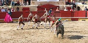 Portuguese-style bullfighting - Pega de caras