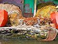 Pelicano Rodeado de Colores.jpg