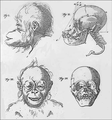 Petrus Camper - Natuurkundige Verhandelingen over den Orang-outang.png