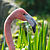 Phoenicopterus roseus Luc Viatour.jpg
