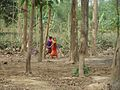 Picher 18 Madhupur National Park.jpg