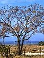 PikiWiki Israel 10314 Geography of Israel.JPG