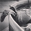 PikiWiki Israel 35839 Blind sea turtle.jpg
