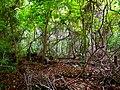 Pinckney Island National Wildlife Refuge (5958500544).jpg
