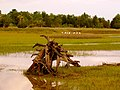 Pinckney Island National Wildlife Refuge (5958502206).jpg